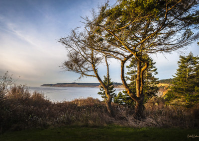 Light on Ebey's Landing
